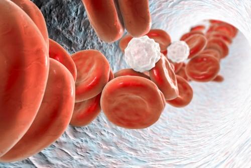 ljakleukocyty