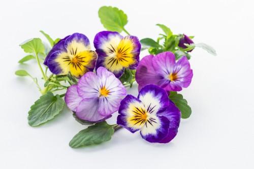 kjakkwiatywebsite